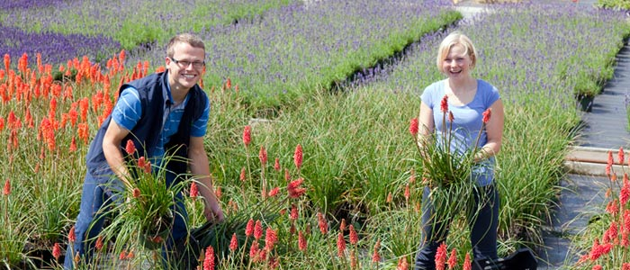"""Job offer"" – International Hardy Plant Union offers young gardeners work placements in Europe"